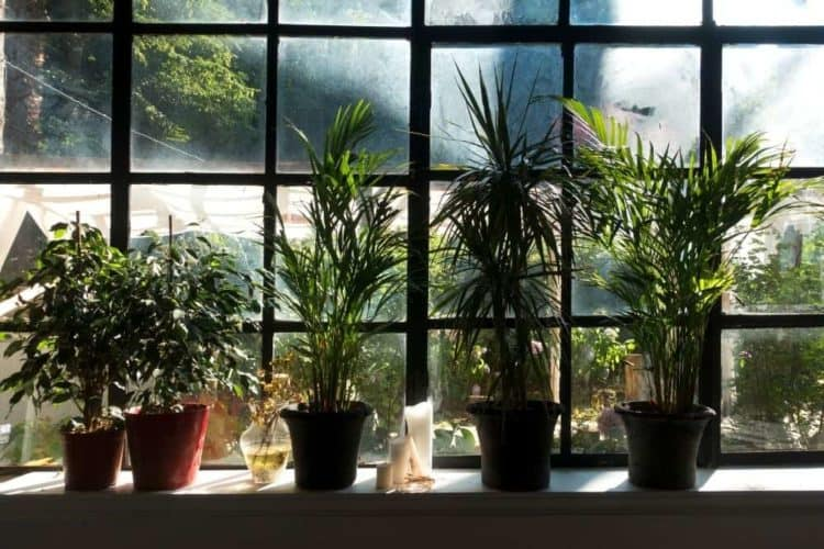 Plant trees to block lights from windows
